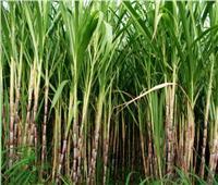 البنك الزراعي يطلق مبادرة لتمويل إنشاء 50 فدانًا من الحقول الاسترشادية بمحافظات الصعيد