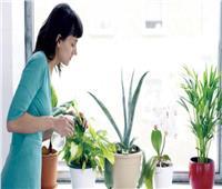 فوائد النباتات الصحية .. تعرف عليها