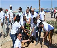 منتدي الشباب العربي الأفريقي يزرع الأشجار المثمرة في البحر الأحمر