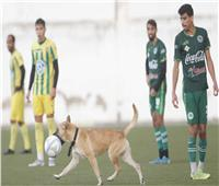 كلب يقتحم الملعب ويسجل هدف رائع بالرأس في مبارة كرة قدم | فيديو