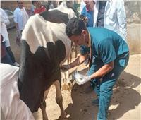 قافلة جامعة سوهاج البيطرية تنطلق لقرية آبار الملك وتعالج 560 حالة مرضية