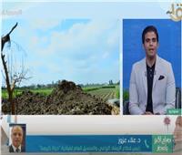 «الزراعة»: 332 مجمعا في القرى لخدمة مزارعي مصر