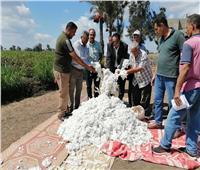 «بداية مبشرة».. ارتفاع إنتاجية فدان القطن بدمياط لـ 13 قنطارًا