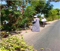 تقليم الأشجارعلى طريق مصر أسوان الزراعي
