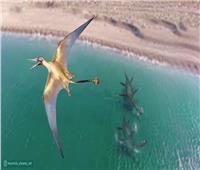 """العثور على حفرية """"تنين طائر"""" عمره 160 مليون عام في تشيلي"""