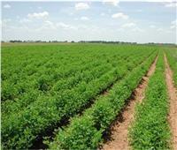 تسهيلات لمنتفعي أراضي مشروع الـ١٫٥ مليون فدان