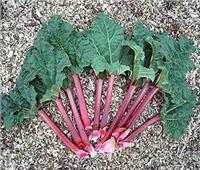 فوائد سحرية لنبات «الراوند» .. يقي من السرطان ويعالج مرض السكري