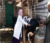 استمرار أعمال الحملة القومية للتحصين ضد مرض الطاعون بالقليوبية