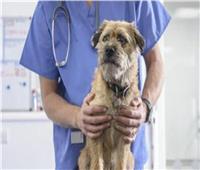 إعترافات الطبيب المُعتدي على ممرض في واقعة «السجود للكلب»