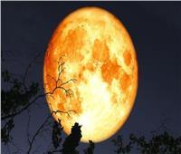 الليلة .. ذروة ظهور «قمر الحصاد» المكتمل