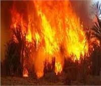 السيطرة على حريق نشب في أرض زراعية بأسيوطدون خسائر بشرية