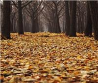 «البحوث الفلكية» توضح مفهوم الاعتدال الخريفي| فيديو