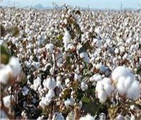 جزاءات للشركات المتأخرة عن سداد مستحقات مزارعى القطن