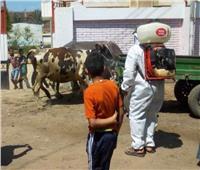 قافلة بيطرية ل٣ قري بمركز الحسينية بالشرقية