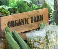 الزراعة العضوية وإمكانية التوسع فيها