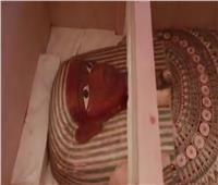 6 اسباب تدفعك لزيارة الجناح المصري في إكسبو دبي