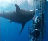 اصطيادالقرش «الوحش».. طوله 7 أقدام ويزن ربع طن