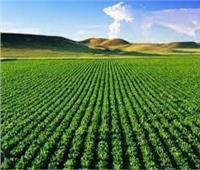نشاط مكثف لمديريات الزراعة لمواجهة السحابة السوداء والتعديات بالمحافظات