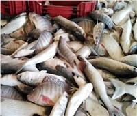 استقرار أسعار الأسماك في سوق العبور الأحد 3 أكتوبر ..والبلطي بـ21 جنيها