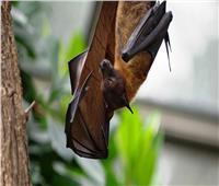 اكتشاف فيروسات كورونا لدى الخفافيش في روسيا