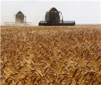 مزارعو القمح في سوريا يشكون تراجع محاصيلهم بعد موسم جفاف