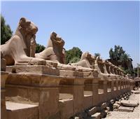 مصطفى وزيرى: اكتشاف 5 رؤوس تماثيل بطريق الكباش| فيديو