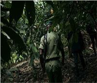 «رمزا للشجاعة».. كونغوليون يحاربون المتمردين بألواح الشوكولاتة