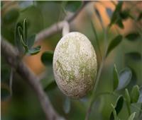 نصائح صحية| فوائد «تفاح الخشب» لعلاج فقر الدم