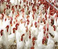 الغرف التجارية: ارتفاع جنوني في أسعار البيض و الخضراوات واللحوم البلدية