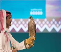 صقر سعودي يباع بأكثر من 54 ألف دولار
