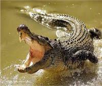 واقعة مأساوية.. تمساح يبتلع طفلة في نهر بإندونيسيا
