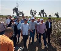«البحوث الزراعية» يعرض الأصناف الجديدة لمحصولي الأرز والقطن بكفر الشيخ