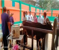 قافلة بيطرية وعلاجية في قرى سمالوط