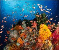 كيف قاومت شعب البحر الأحمر «تقلب المناخ»؟