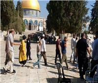 81 مستوطنًا إسرائيليًا يقتحمون المسجد الأقصى