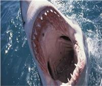 العناية الإلهية تنقذ شابا من هجوم سمكة قرش بأستراليا