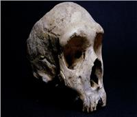 إعادة بناء أول جمجمة إنسان «نياندرتال» في هولندا| فيدي
