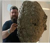 وزنه 177 كيلو.. أكبر عش دبابير بالعالم