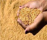 الإحصاء: 943 ألف طن رصيد القمح بالشون والمخازن عام 2019/2020