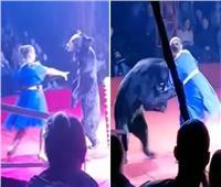 دب يهاجم امرأة حامل.. وعرض السيرك يتحول إلى مأساة   فيديو وصور