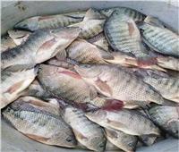 استقرار أسعار الأسماك في سوق العبور 19 أكتوبر.. والبلطي بـ22 جنيها