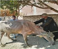 علاج 1371 حيوان وطائر فى قافلة بيطرية بالزقازيق