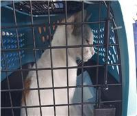 اعتقال «قط» ينقل المخدرات للسجناء في روسيا