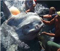 اصطياد سمكة عملاقة تزن 2 طن من البحر المتوسط