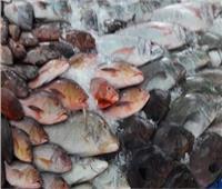 قبل ترويجها.. ضبط 4 أطنان أسماك مجهولة المصدر بالقليوبية