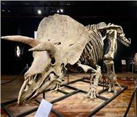 بيع أكبر ديناصور بـ3 قرون في مزاد علني بأكثر من 6 ملايين دولار| فيديو