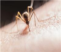 اكتشاف مهم قد يوقف انتشار «الملاريا» عبر خداع البعوض.. تعرف عليه
