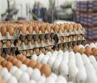 شعبة الثروة الداجنة: سعر طبق البيض انخفض لـ49 جنيها | فيديو