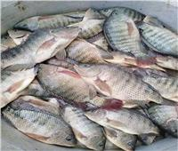 استقرار أسعار الأسماك في سوق العبور اليوم 24 أكتوبر