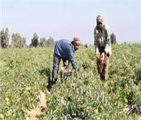«زراعة المنيا» تضبط 25 طن أسمدة قبل بيعها بالسوق السوداء